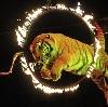 Цирки в Большом Пикино