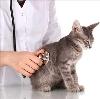 Ветеринарные клиники в Большом Пикино